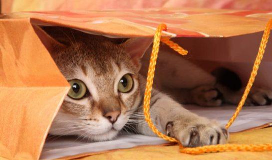 Katze beschäftigen bei Abwesenheit