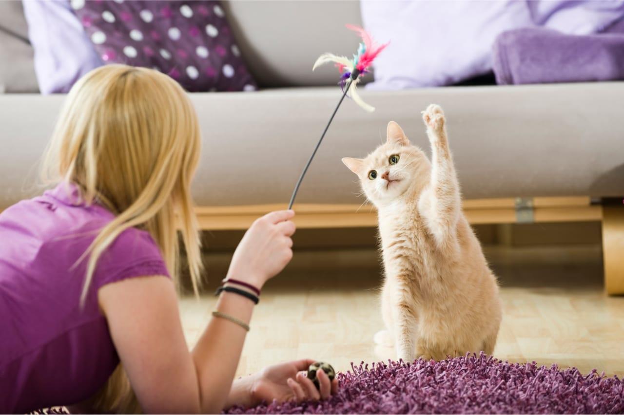 mit Katzenangel spielen