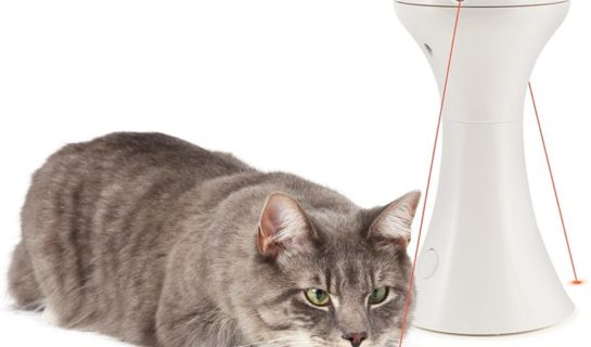 Der Multilaser – ein Allrounder unter den Katzenspielzeugen