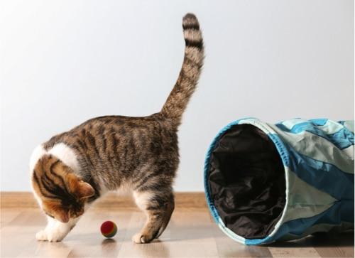 Mit der Katze spielen