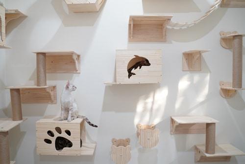 Wandpark zum klettern und spielen für Katzen