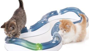 Kugelbahnen für Katzen – interaktives Katzenspielzeug gegen Langeweile