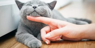 Faule Katzen zum regelmäßigem Spielen animieren