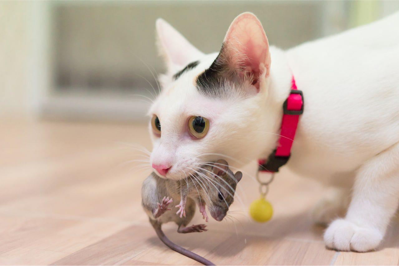 Katze mit Beute