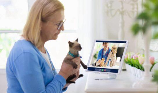Telemedizin für Tiere – Ist sie sinnvoll?