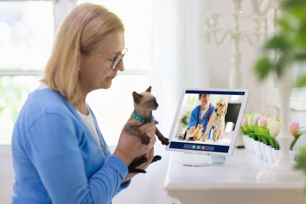 Video-Chat beim Online Tierarzt