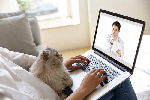 Digitale Sprechstunde beim Tierarzt